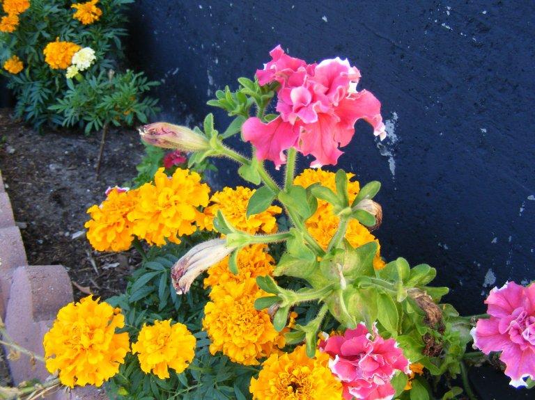 wild_flowers_ul