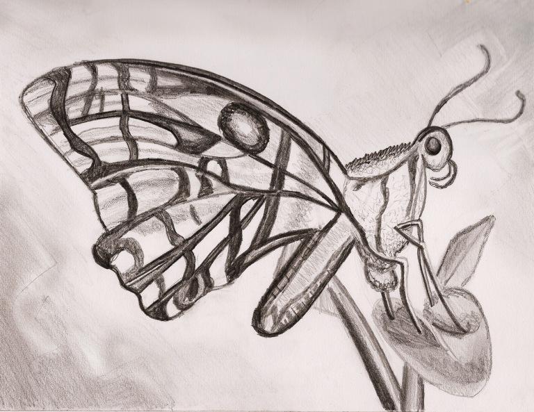 butterfly_ul