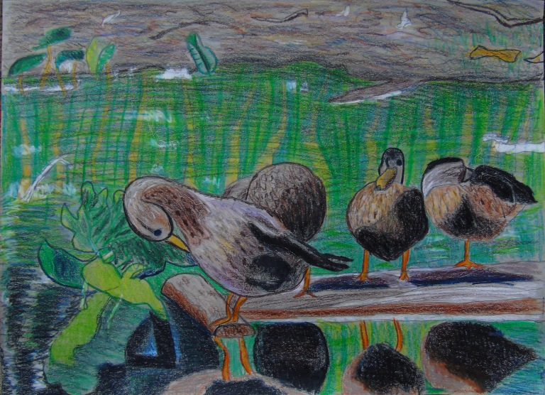 ducks_on_a_log_toned_sketchbook_ul