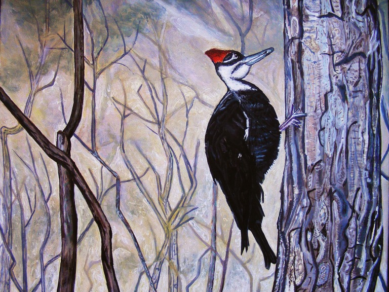 pileated_woodpecker_ul