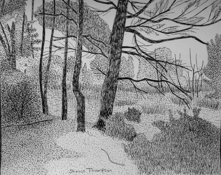 Treed_Marsh_PenandInk_ul