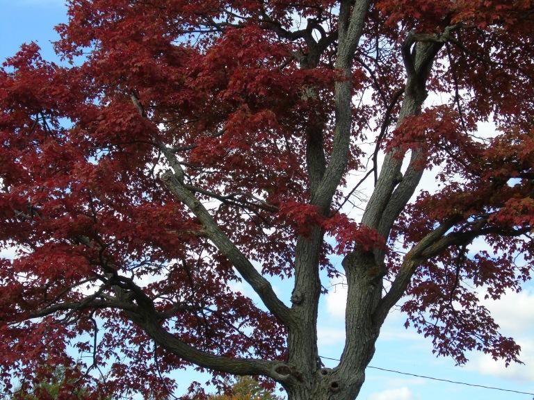 Guindon_Tree_Closeup2_ul