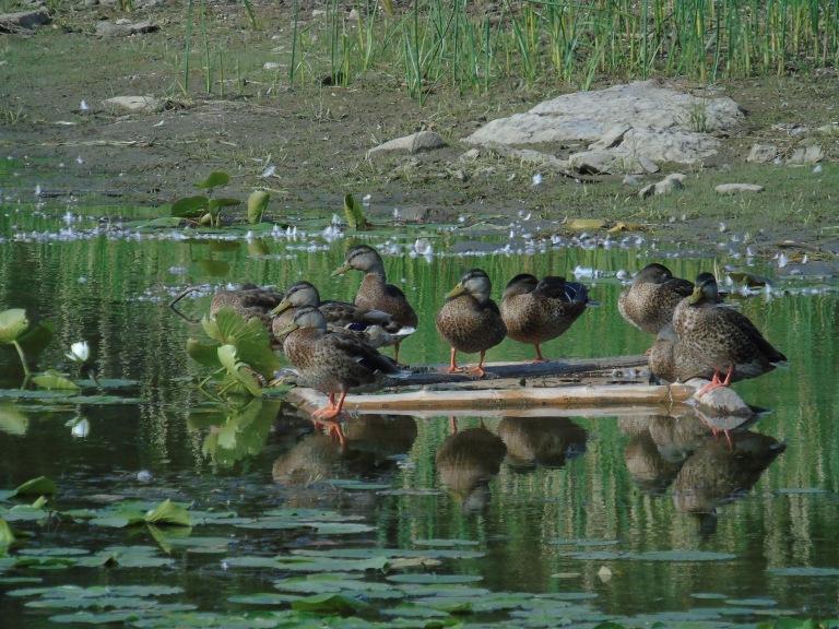quackers1
