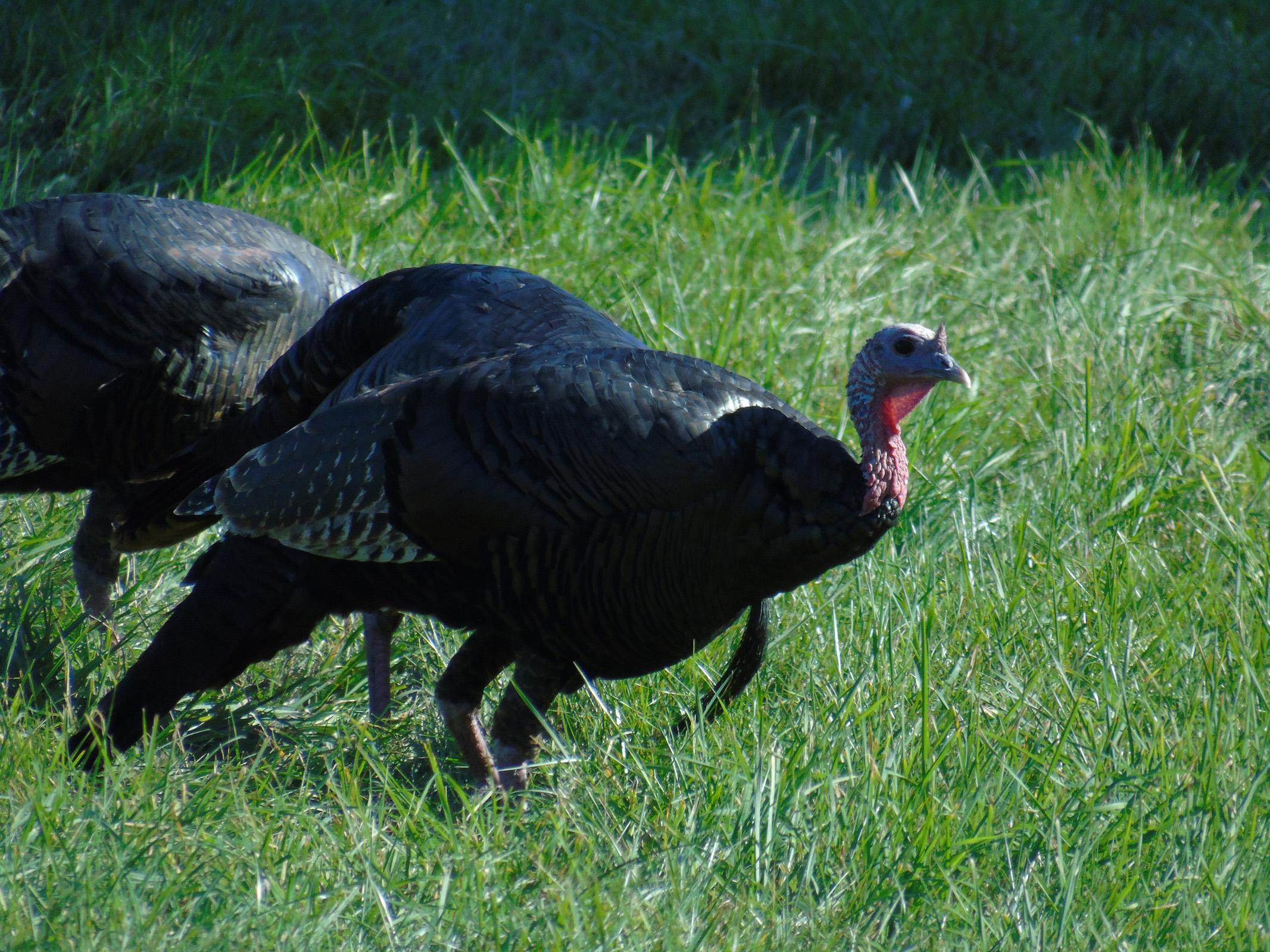 thanksgiving_season9_ul
