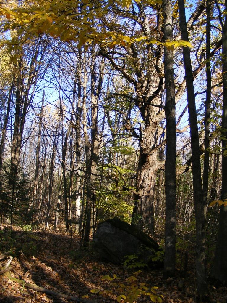 Tree_With_Rock_ul
