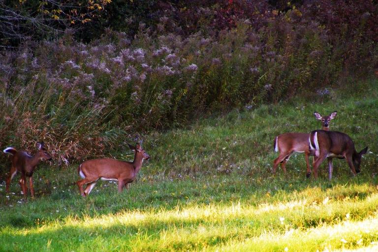 four_deer_in_october_ul