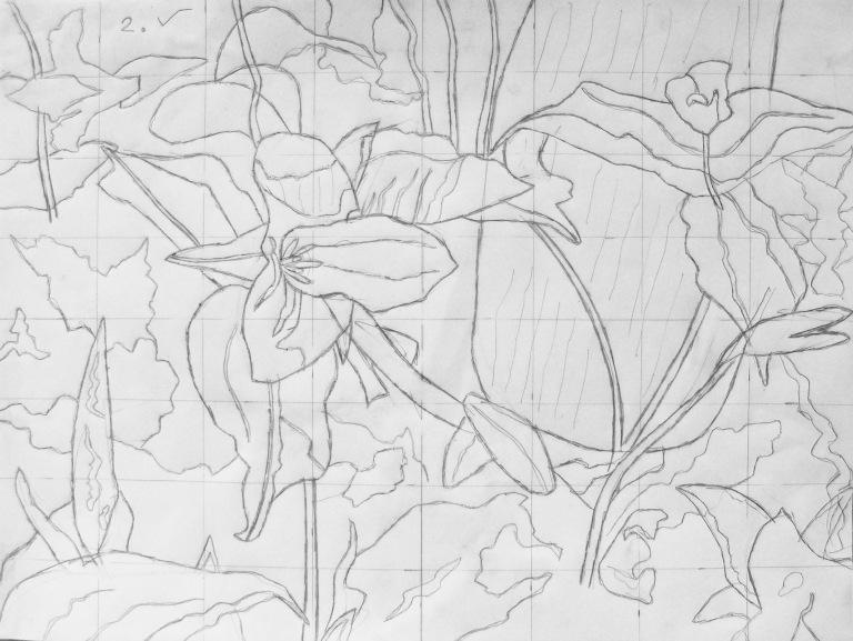 trillium_drawing_ul