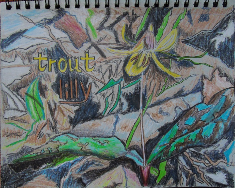 trout_lilly_toned_sketchbook_ul
