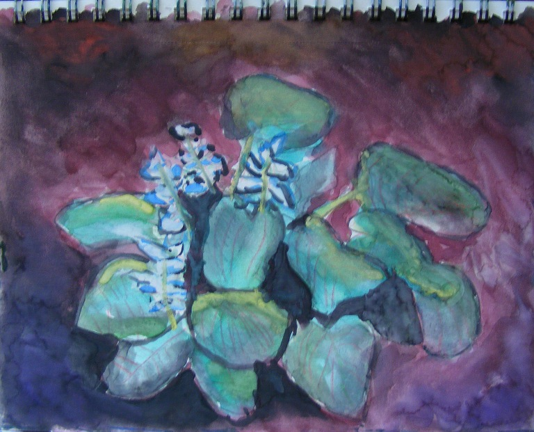 hosta_watercolour_2019_ul