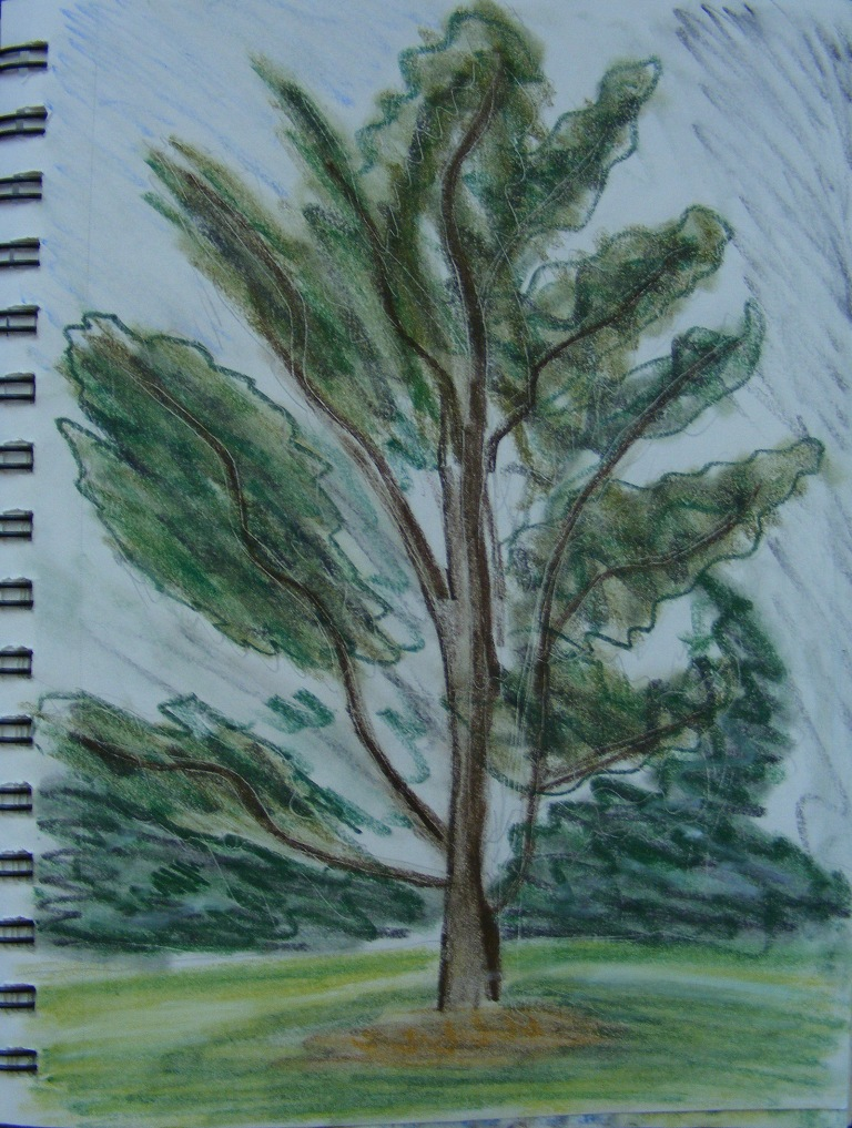 woodlands_tree1_qs_ul