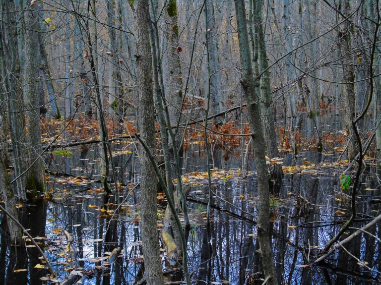 flooded_woods8_ul