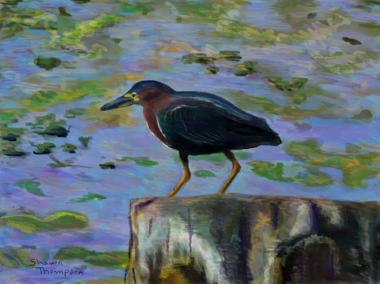Green Heron Stump proof 3_ul