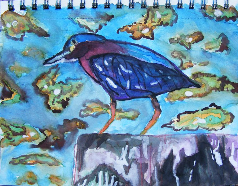 Green heron watercolour