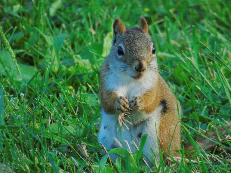 Red_Squirrel_Bright3_ul
