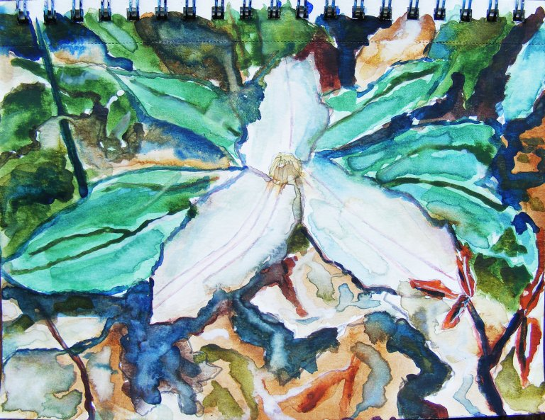 Trillium watercolour