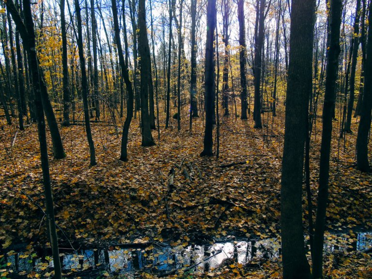 yellow_trail_creek2_ul