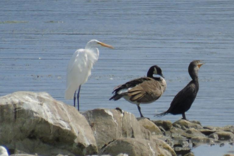 Three species1