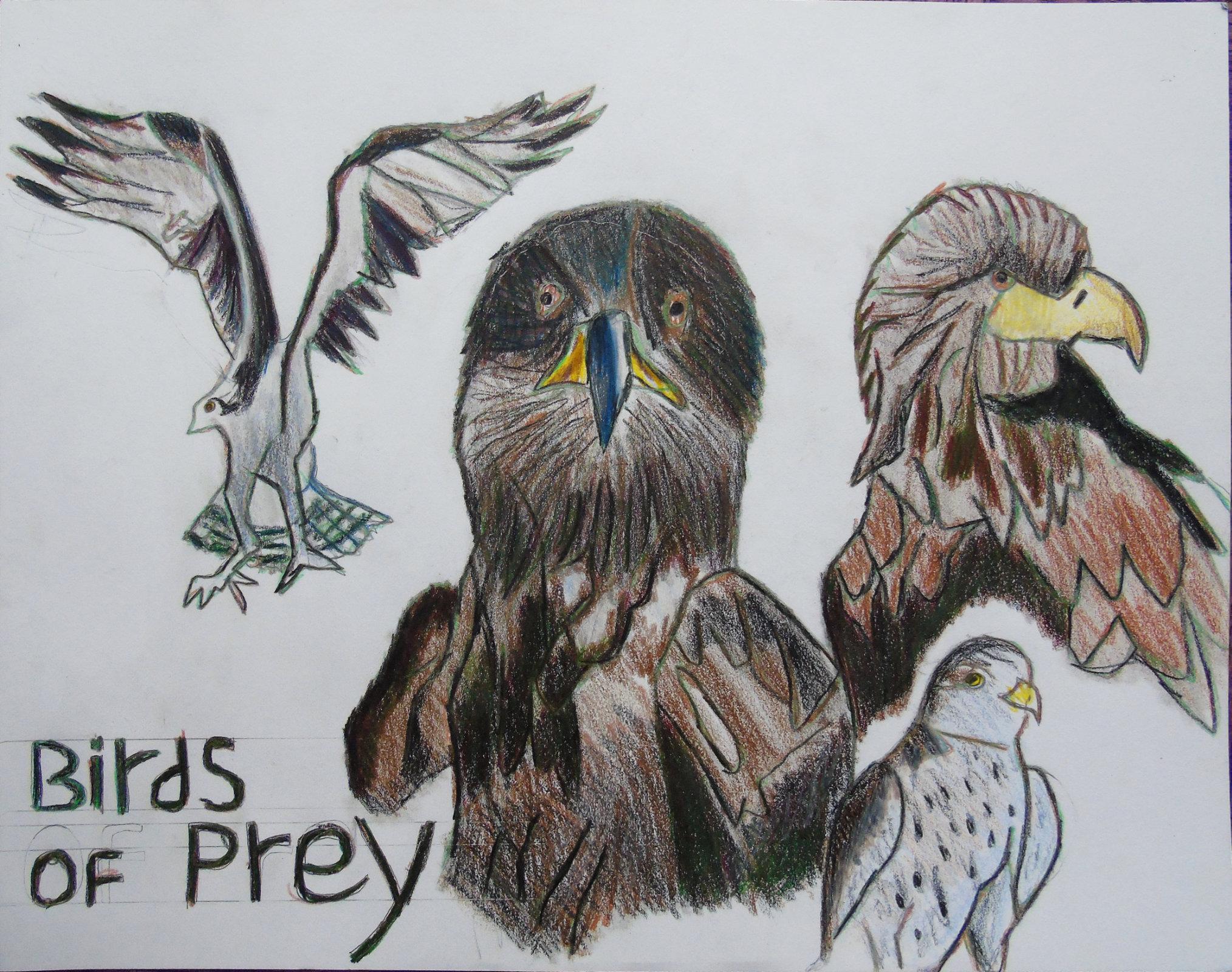 Birds of prey colouredpencils