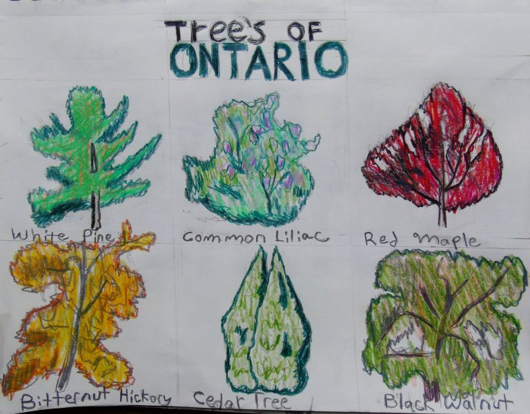 Trees of ontario3