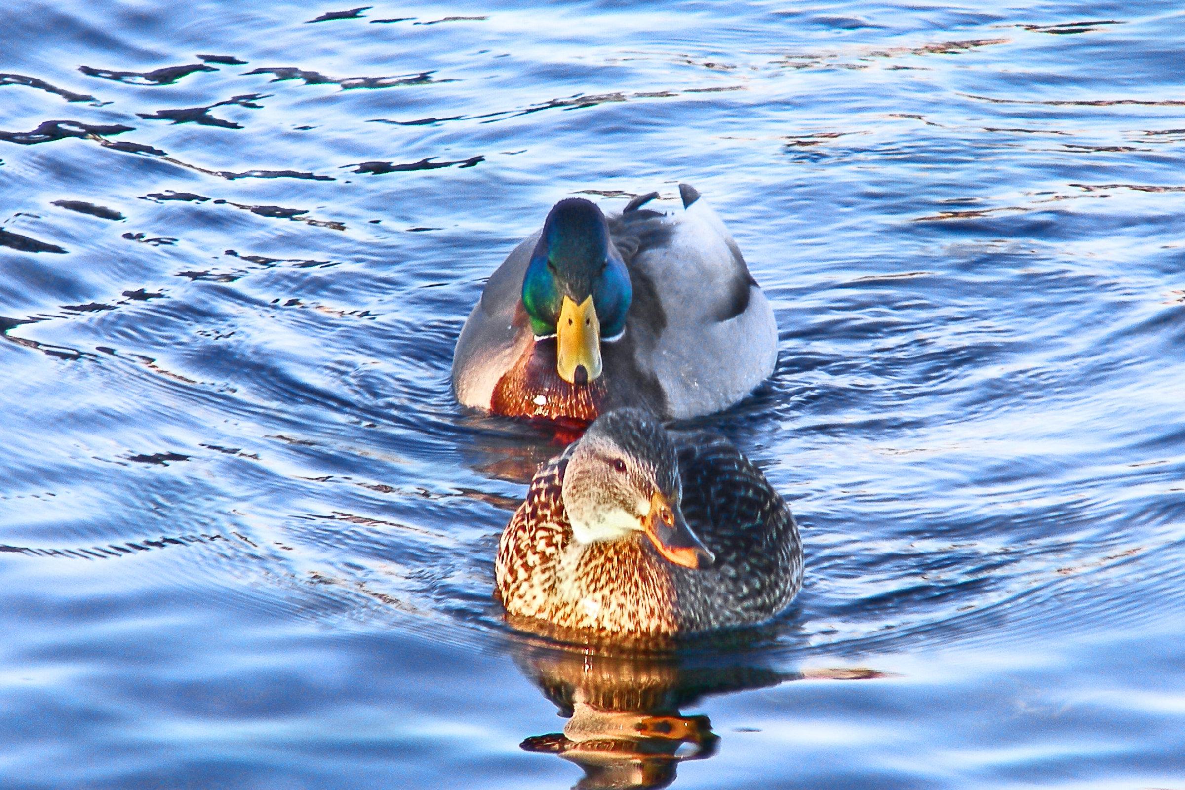 Swim together