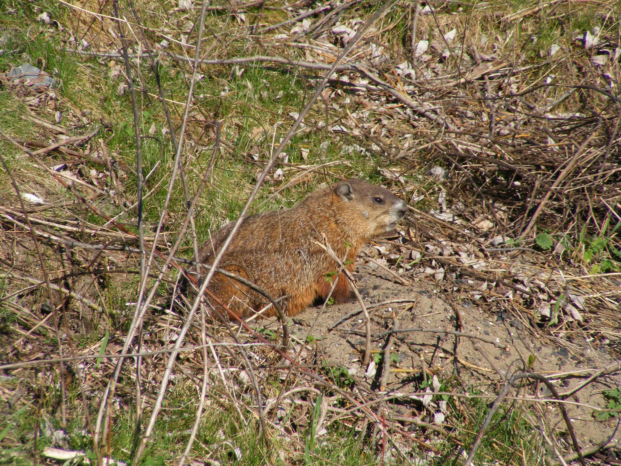 Groundhog 2016 1