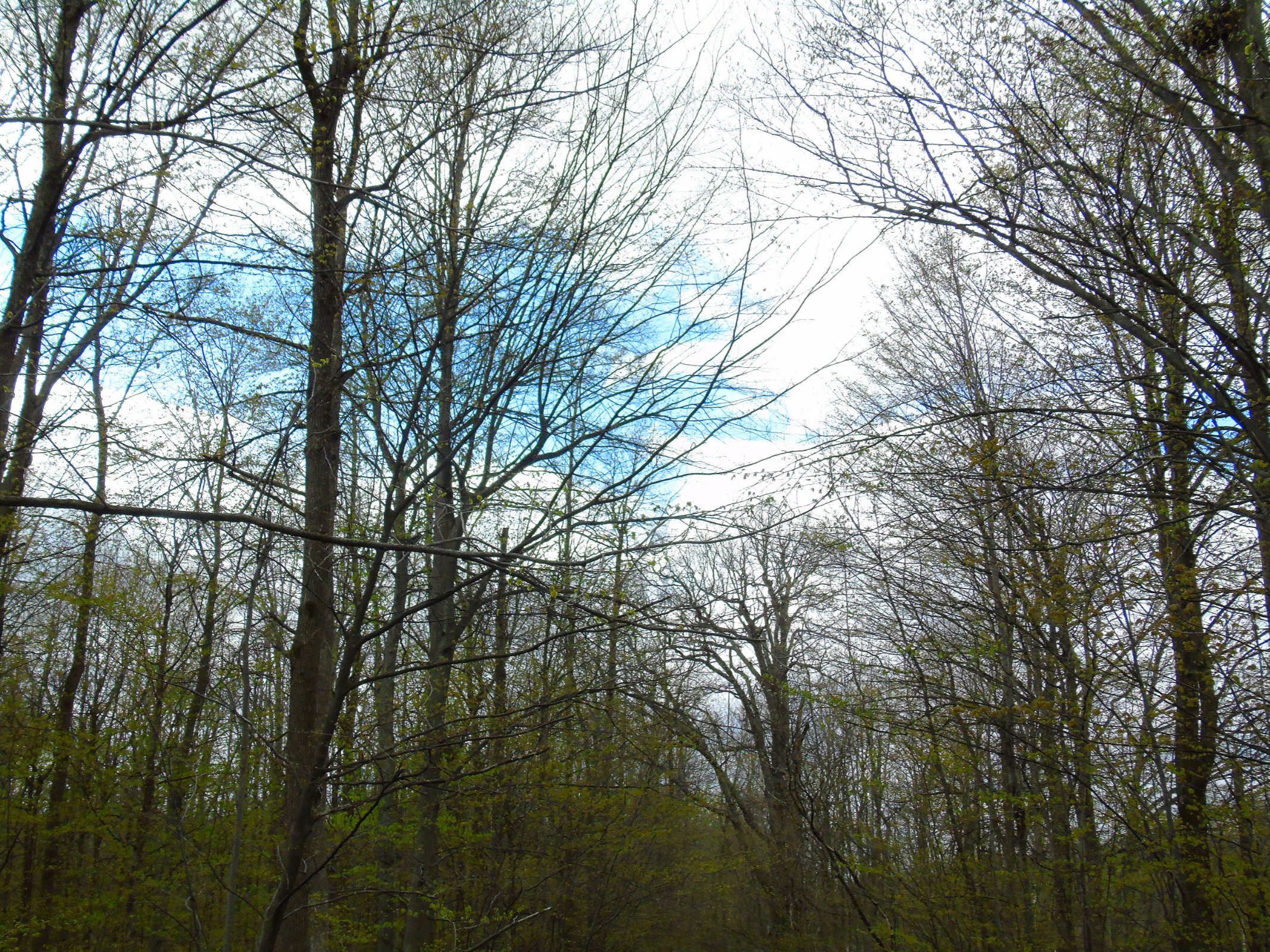 Long sault forest 1